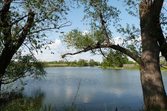рыбалка в озере в поддубье